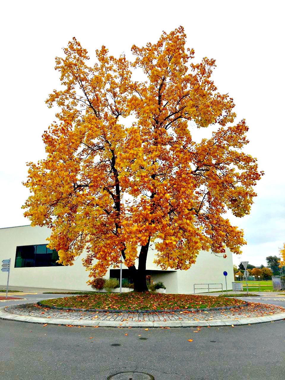 Roundabout Tree